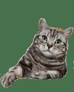 Register ESA cat