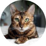 Bengal Emotional Support Cat