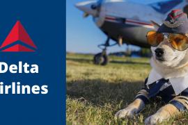 Delta Dog Policy