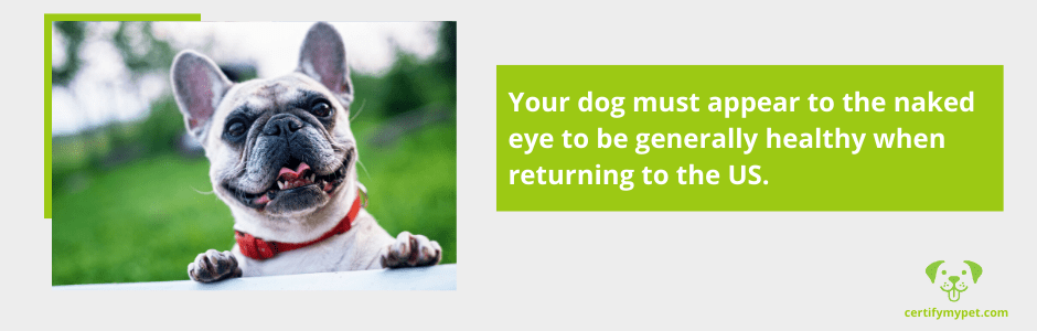 dog returns from international travel to the us