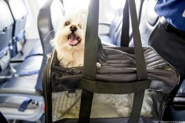 Pet Carrier to Take Your Emotional Support Dog on a Plane