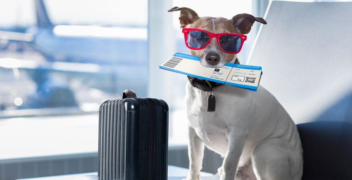 How Much Does it Cost to Fly a Dog