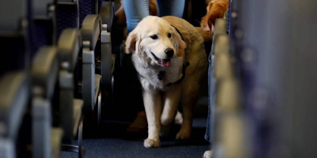 How Much Does it Cost to Fly a Large Dog?