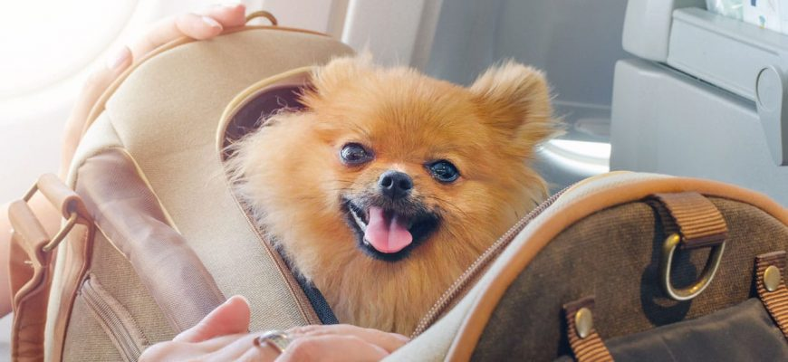 Taking Your Dog on a Plane: Do's and Don'ts