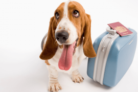 traveling internationally with a dog