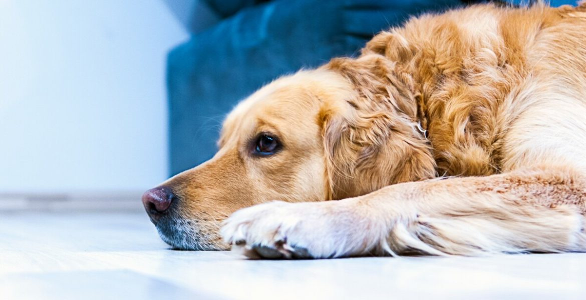 Can a Landlord Say NO to an Emotional Support Dog