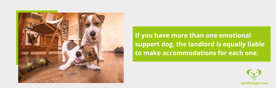 Can You Live With More Than One Emotional Support Dog