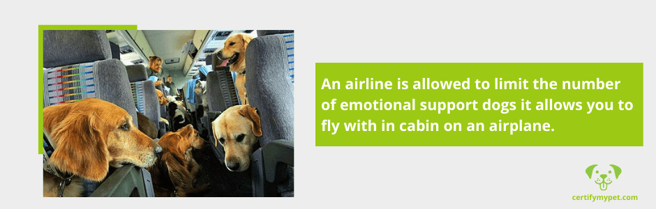 Can You Take More Than One Emotional Support Dog on a Plane?