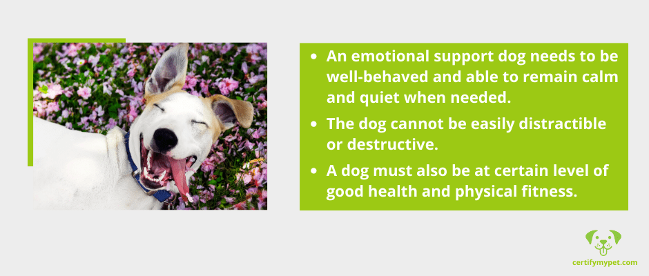 How to Choose an Emotional Support Dog for Depression