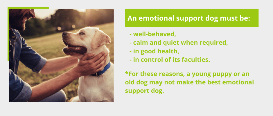 Choosing an Emotional Support Dog for Anxiety