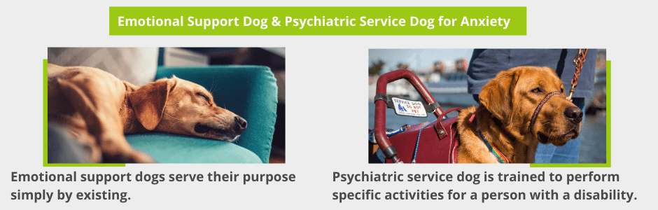 Emotional Support Dog & Psychiatric Service Dog for Anxiety