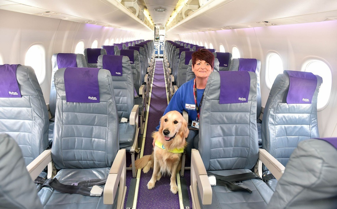 Emotional Support Dogs Fly In Cabin
