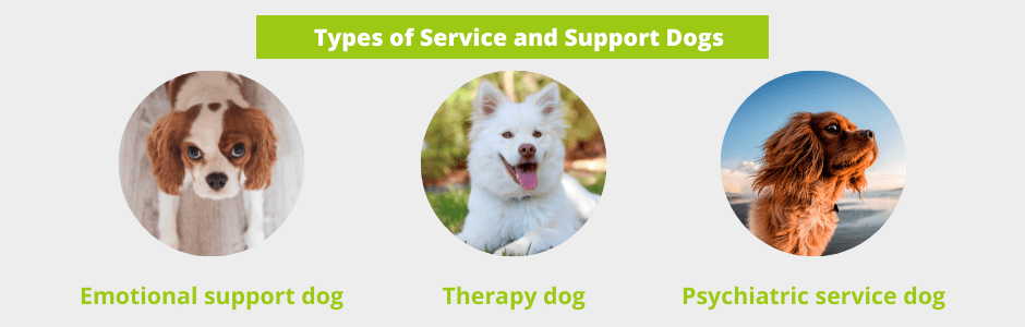 Types of Service and Support Dogs