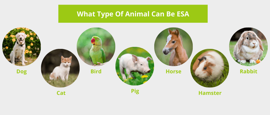 what type of animal can be esa