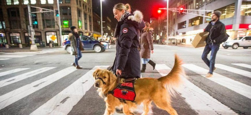 Can an Emotional Support Dog Go Anywhere With You?