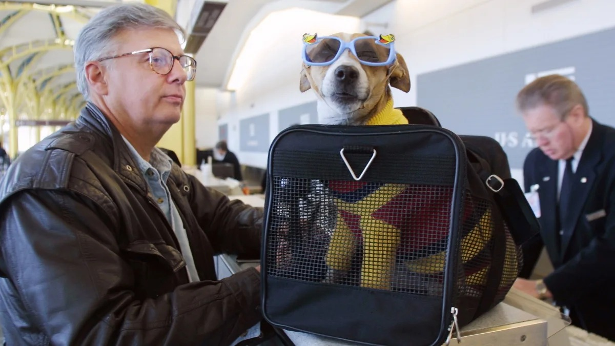 Rights and Restrictions for Bringing an Emotional Support Dog on a Plane