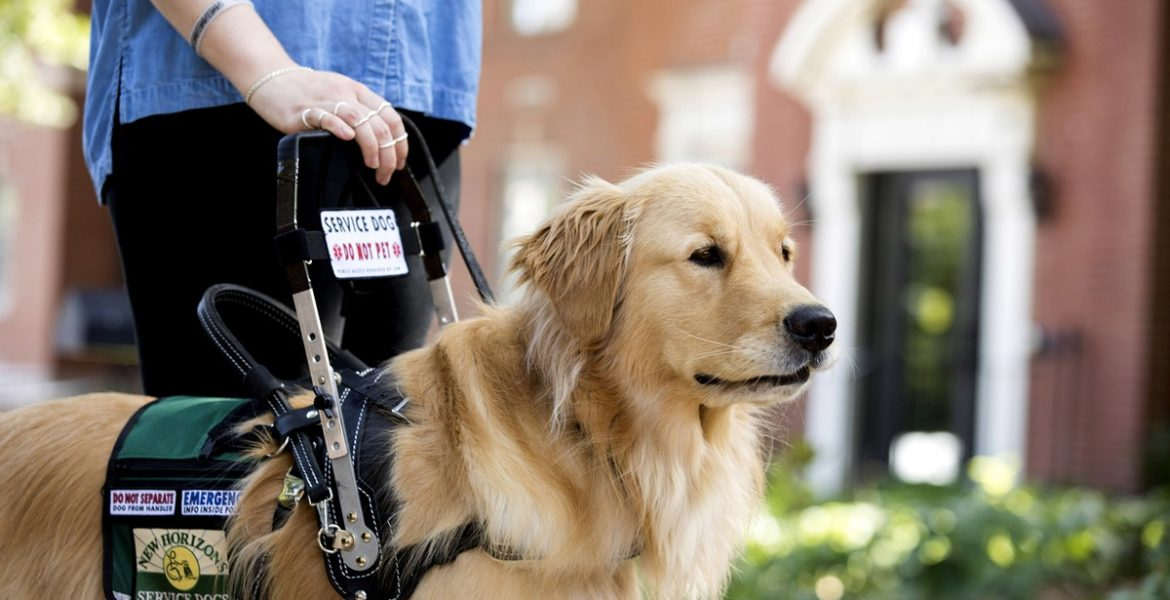 Dr. Bethany McCall on the Power of Emotional Support and Service Dogs Enhancing People's Life