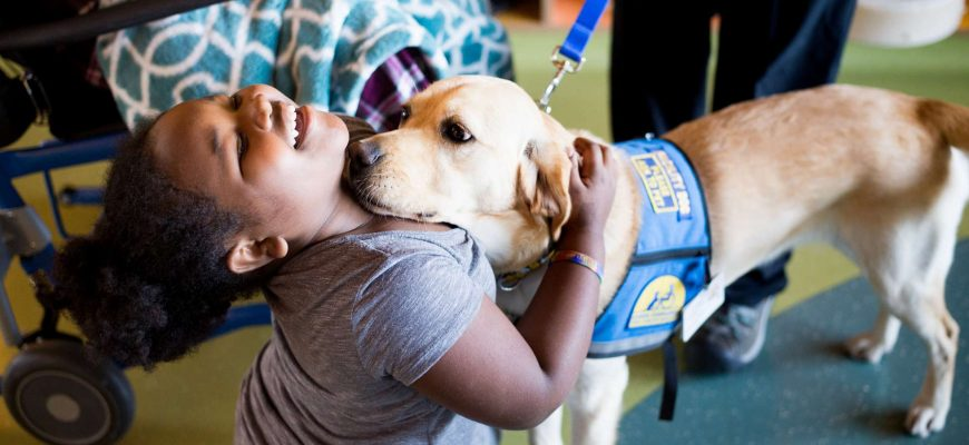 therapeutic possibilities of animals