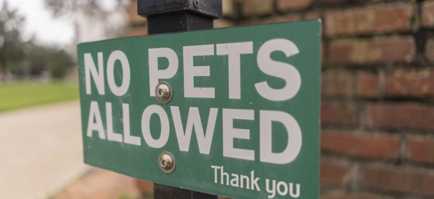 Department of Transportation Could Ban Emotional Support Animals