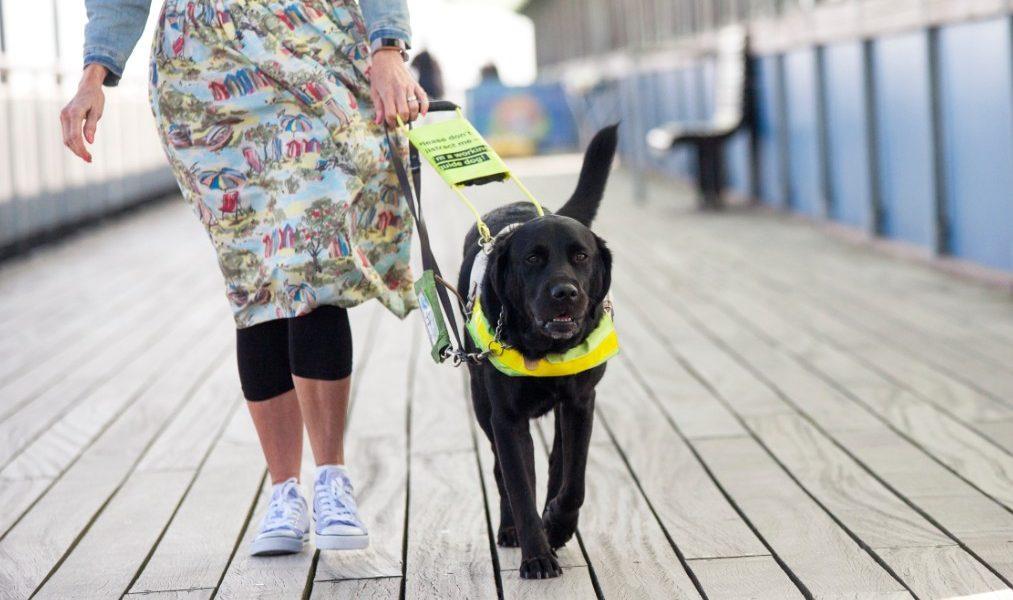Service Dog vs ESA pet