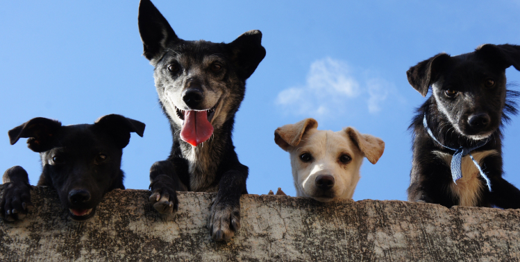 Choose The Right Dog And Assess The Right Features