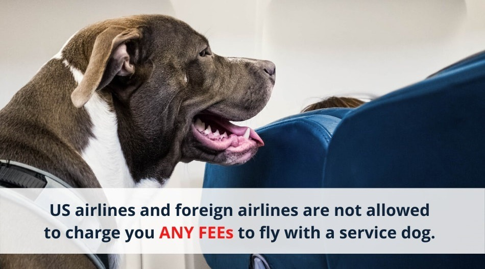 US airlines and foreign airlines are not allowed to charge you ANY additional FEEs to fly with service dog