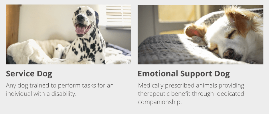 Difference Between Service Dogs and Emotional Support Dogs
