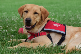 Your Emotional Support Dog Can Become a Service Dog