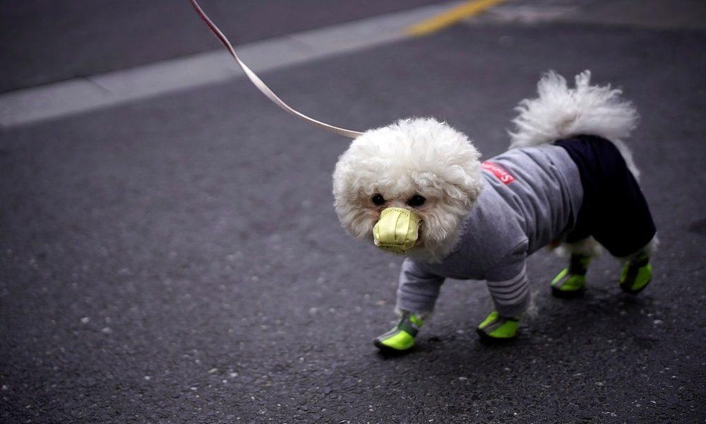 First Dog Dies of Coronavirus