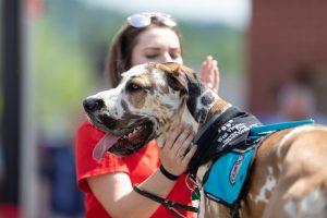 make your emotional support dog a service dog