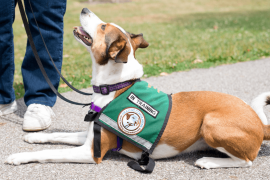 How Psychiatric Service Dogs Can Support Your Mental Health