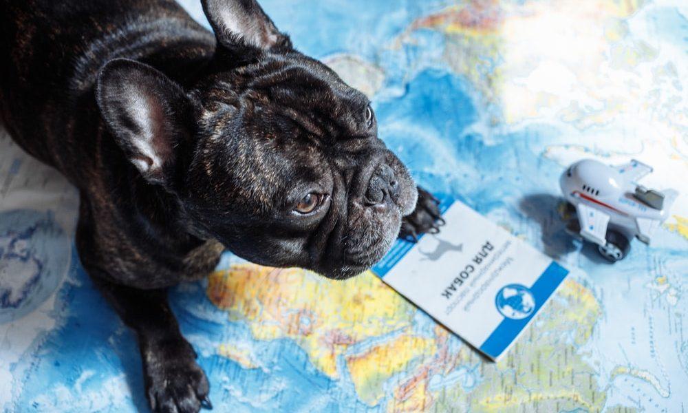 Traveling Internationally with a Service Dog