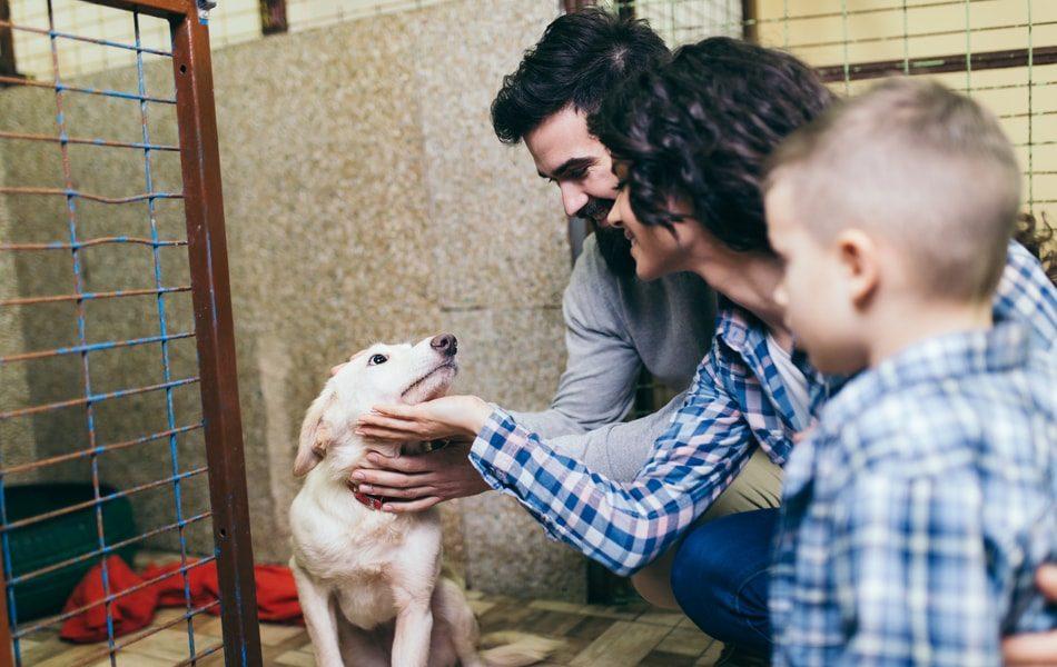 Adopting An Emotional Support Animal Or Service Dog