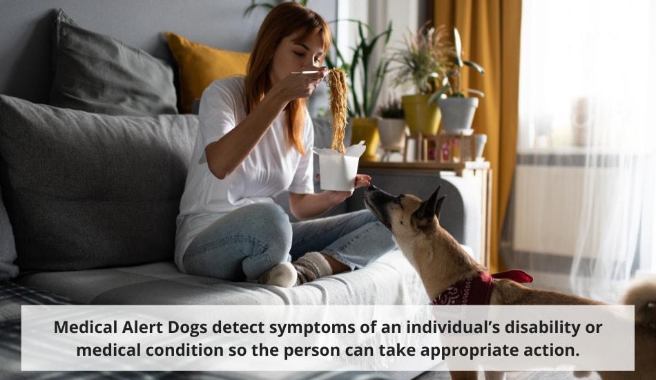 Medical Alert Service Dog