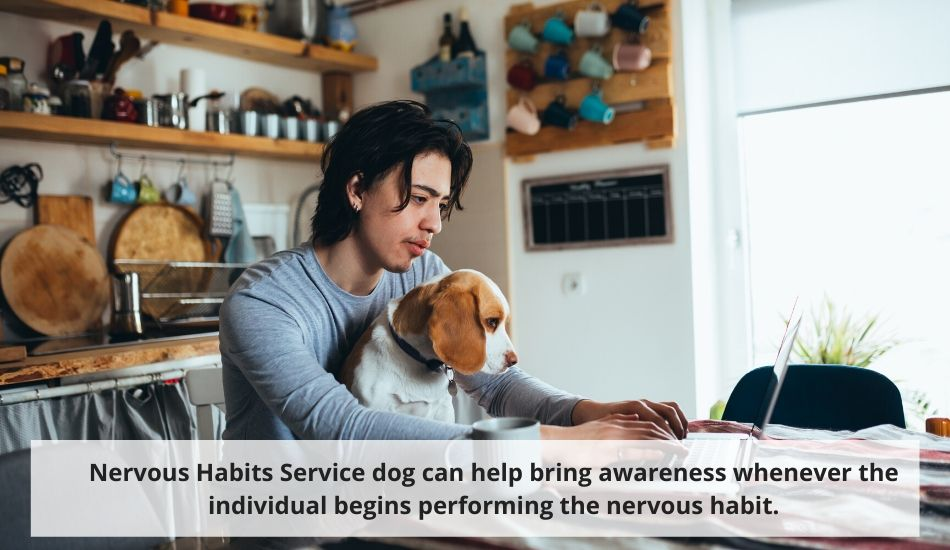 Nervous Habits Service Dog