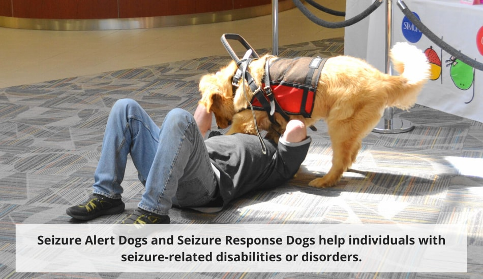 seizure alert and response service dogs