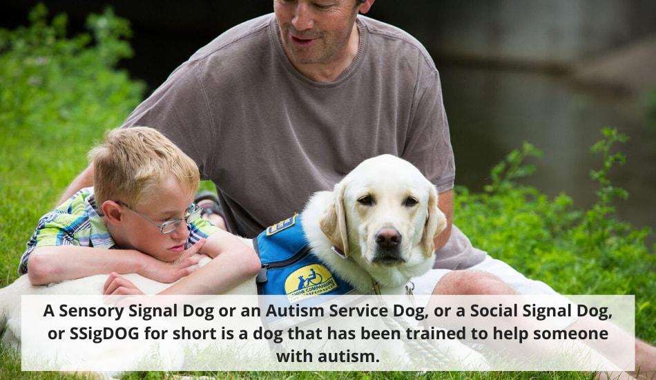 Sensory Signal Service Dog