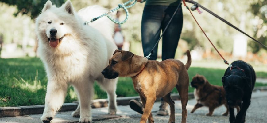 Service Dog Types