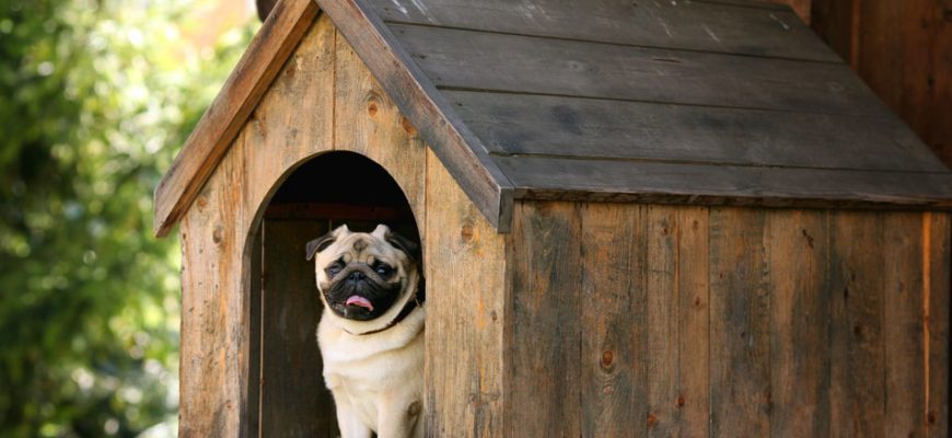 Documentation a Landlord Can Ask for Providing a Service Dog