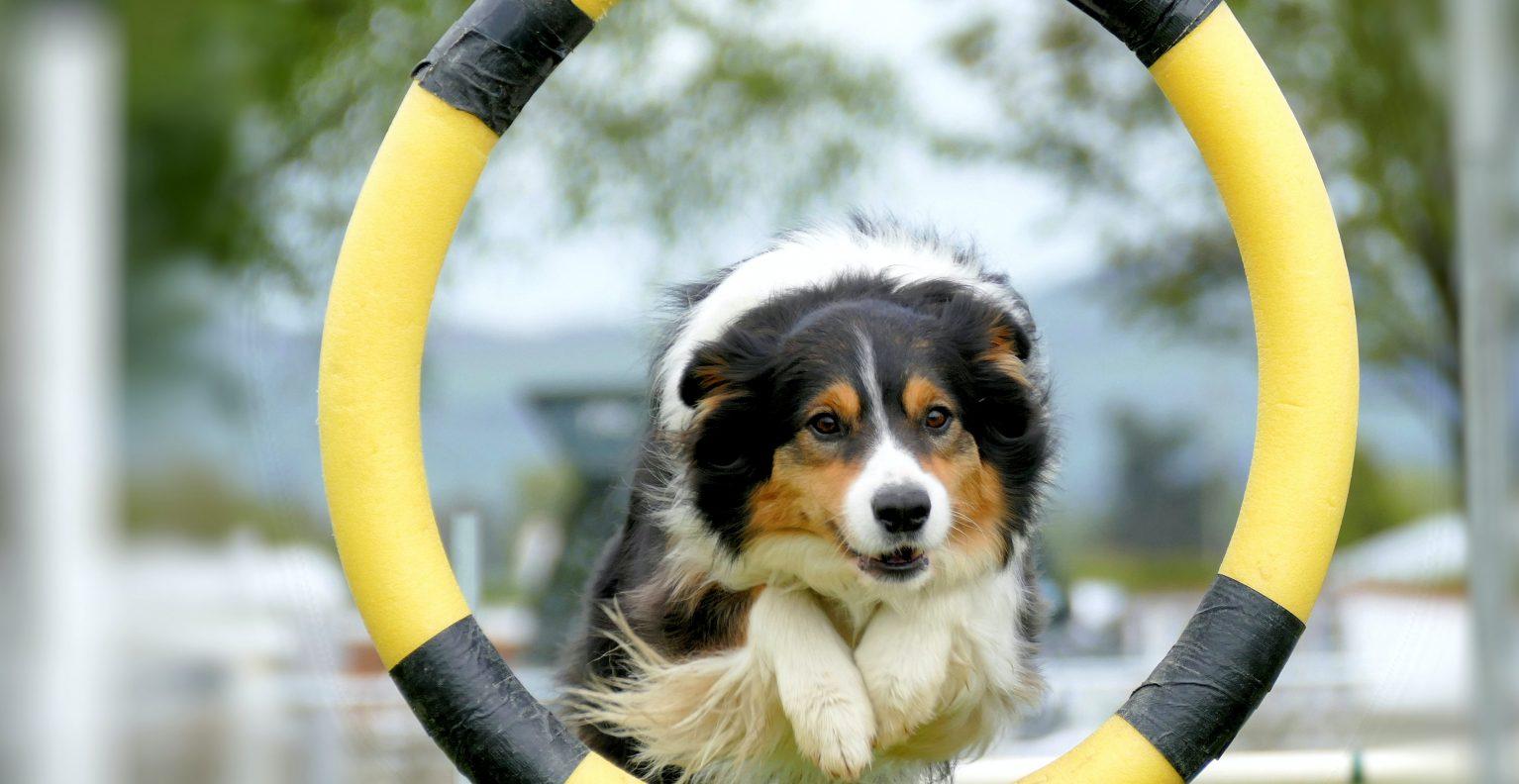 Top 8 Online Dog Training Classes