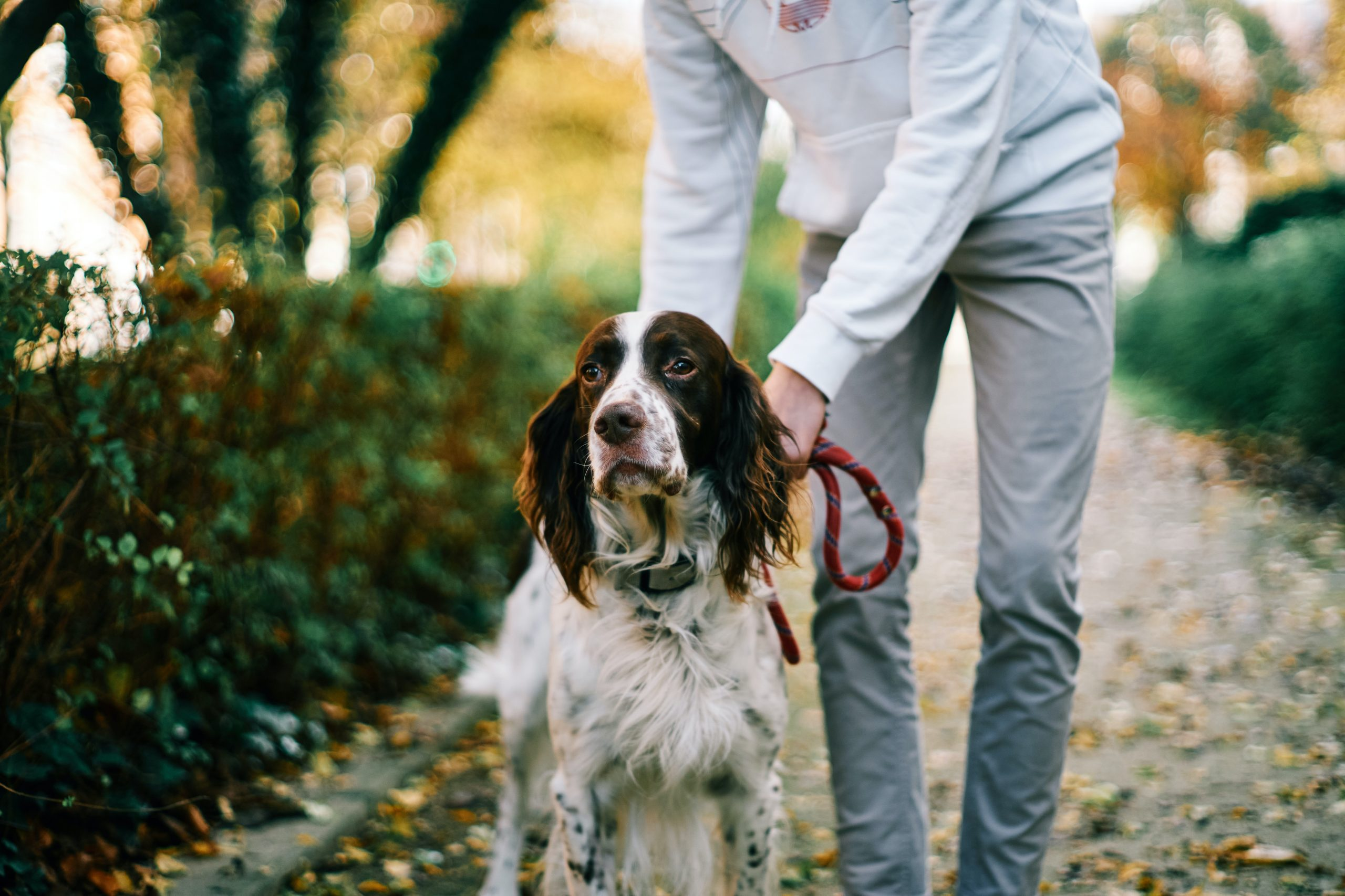 the best of the best among online dog training classes
